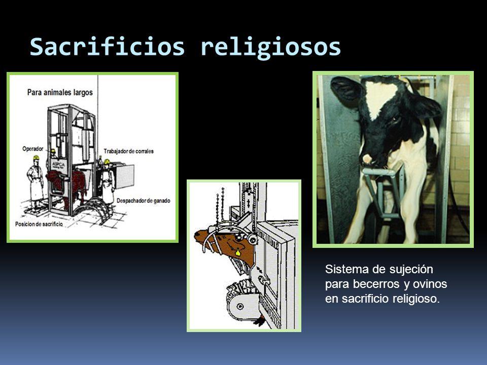 Sacrificios religiosos