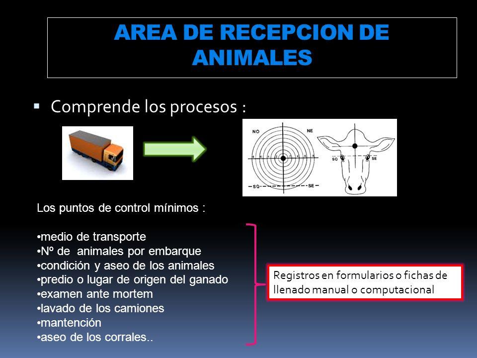 AREA DE RECEPCION DE ANIMALES