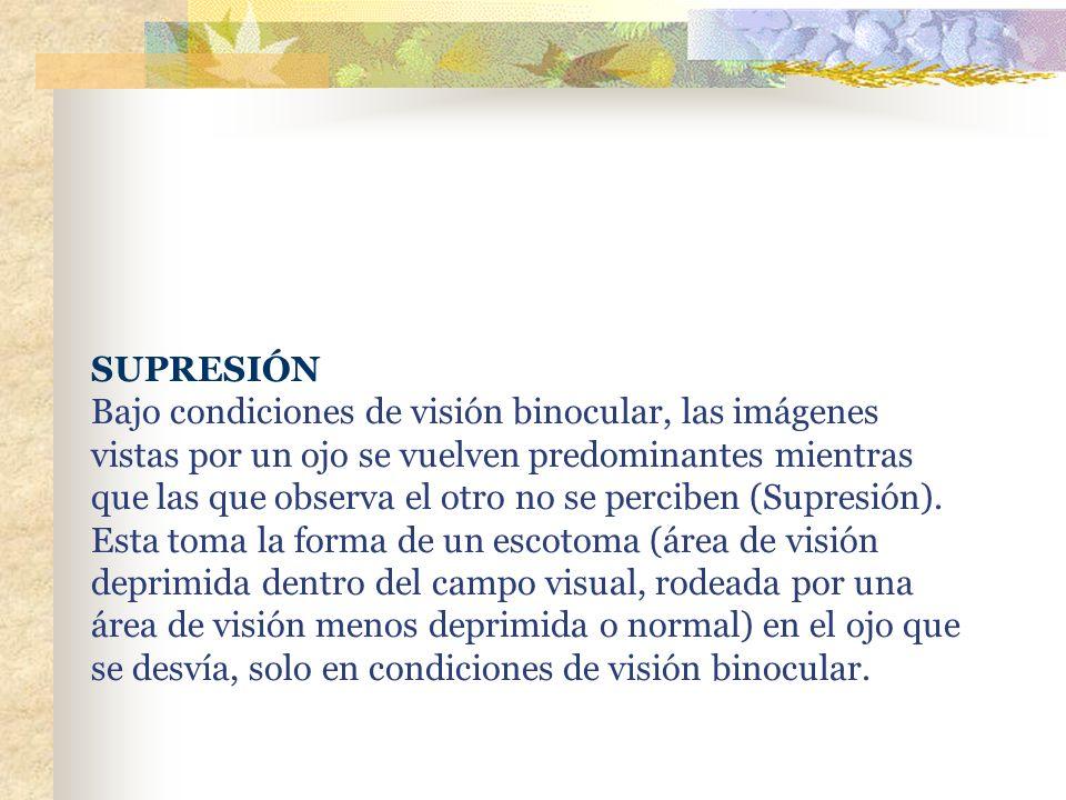 SUPRESIÓN Bajo condiciones de visión binocular, las imágenes vistas por un ojo se vuelven predominantes mientras que las que observa el otro no se perciben (Supresión).