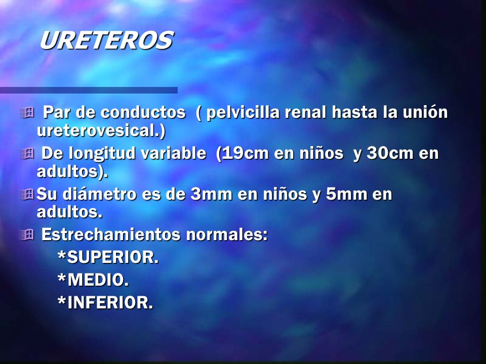 URETEROS Par de conductos ( pelvicilla renal hasta la unión ureterovesical.) De longitud variable (19cm en niños y 30cm en adultos).
