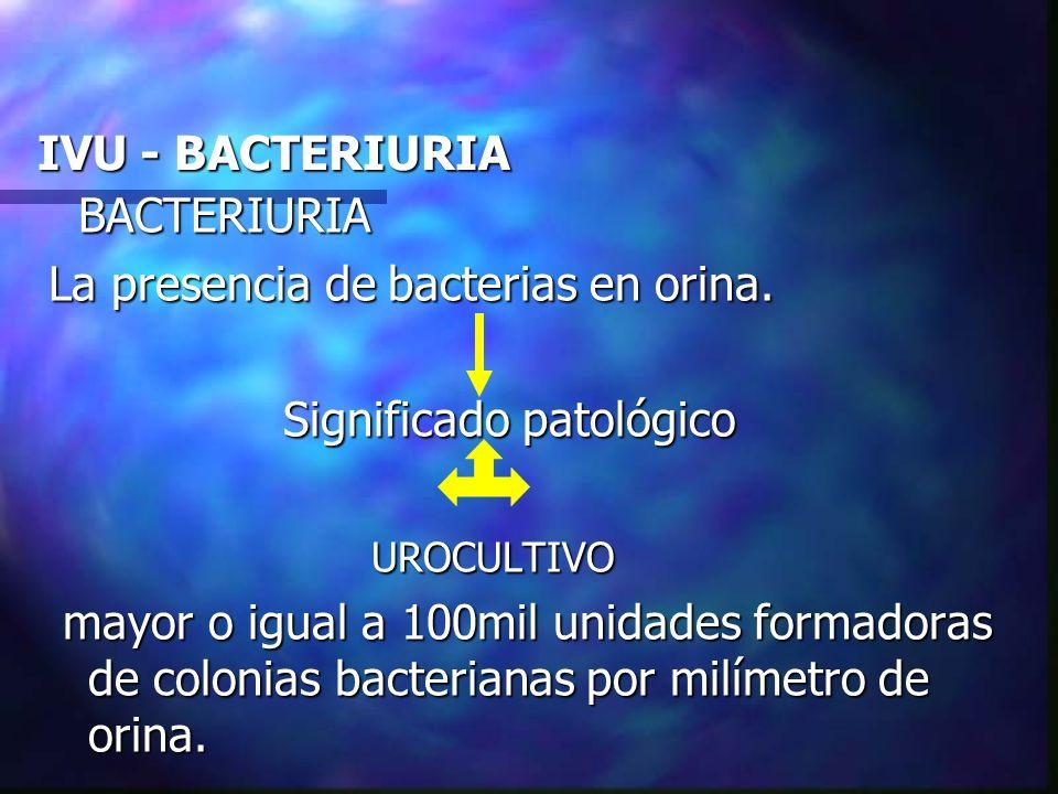 IVU - BACTERIURIA BACTERIURIA. La presencia de bacterias en orina. Significado patológico. UROCULTIVO.
