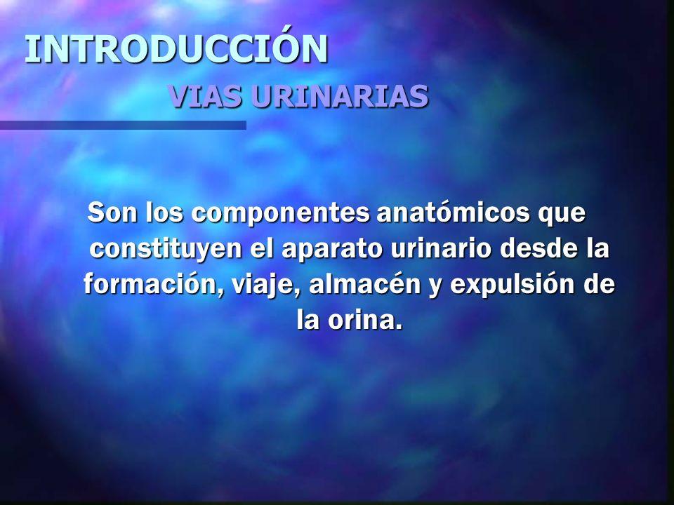 INTRODUCCIÓN VIAS URINARIAS