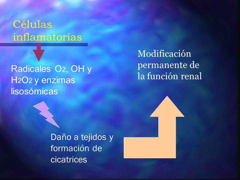 Células inflamatorias