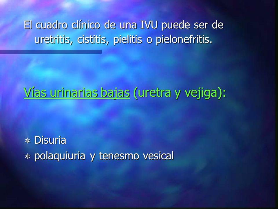 Vías urinarias bajas (uretra y vejiga):