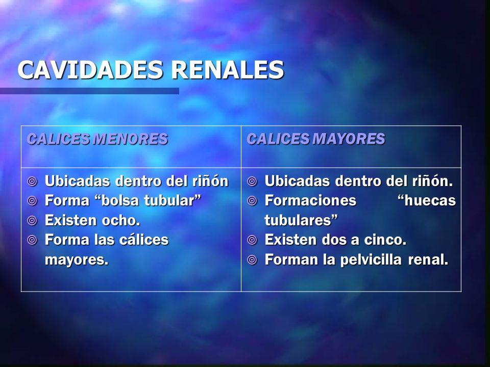 CAVIDADES RENALES CALICES MENORES CALICES MAYORES