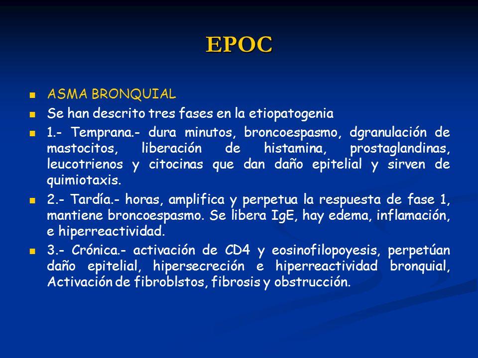 EPOC ASMA BRONQUIAL Se han descrito tres fases en la etiopatogenia