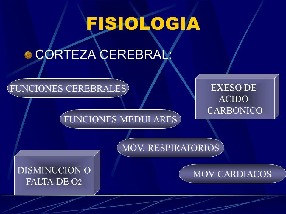 FISIOLOGIA CORTEZA CEREBRAL: EXESO DE FUNCIONES CEREBRALES ACIDO