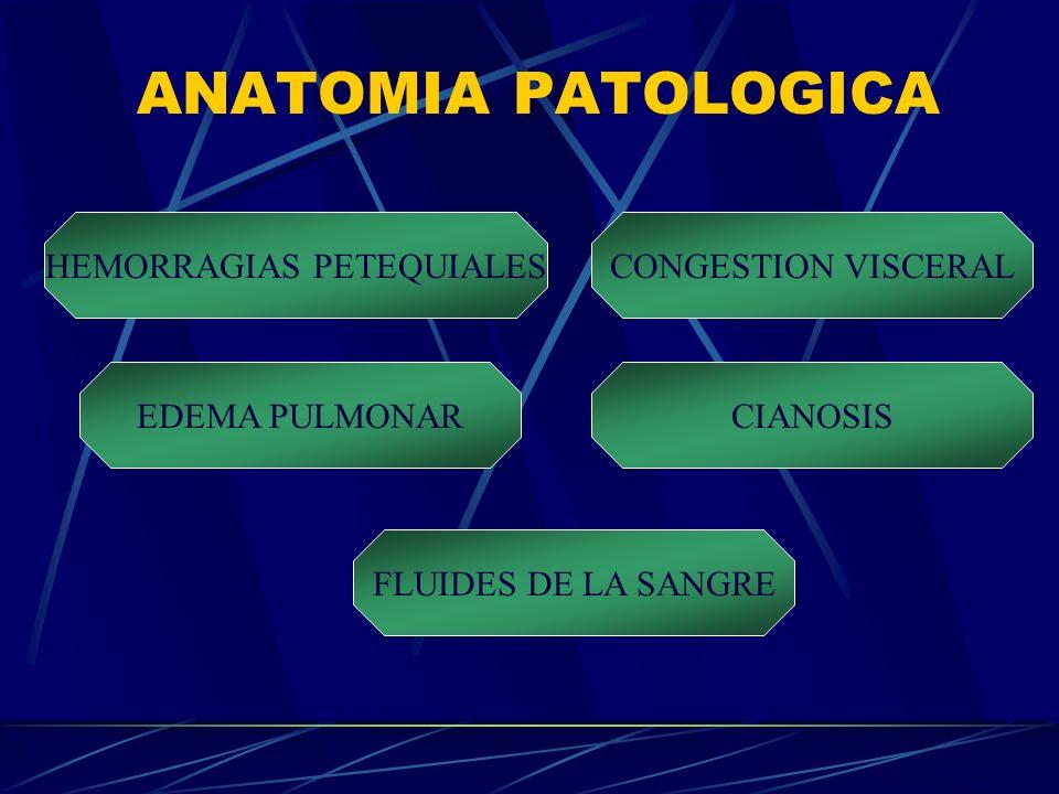 HEMORRAGIAS PETEQUIALES