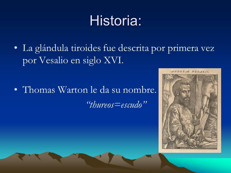 Historia: La glándula tiroides fue descrita por primera vez por Vesalio en siglo XVI. Thomas Warton le da su nombre.