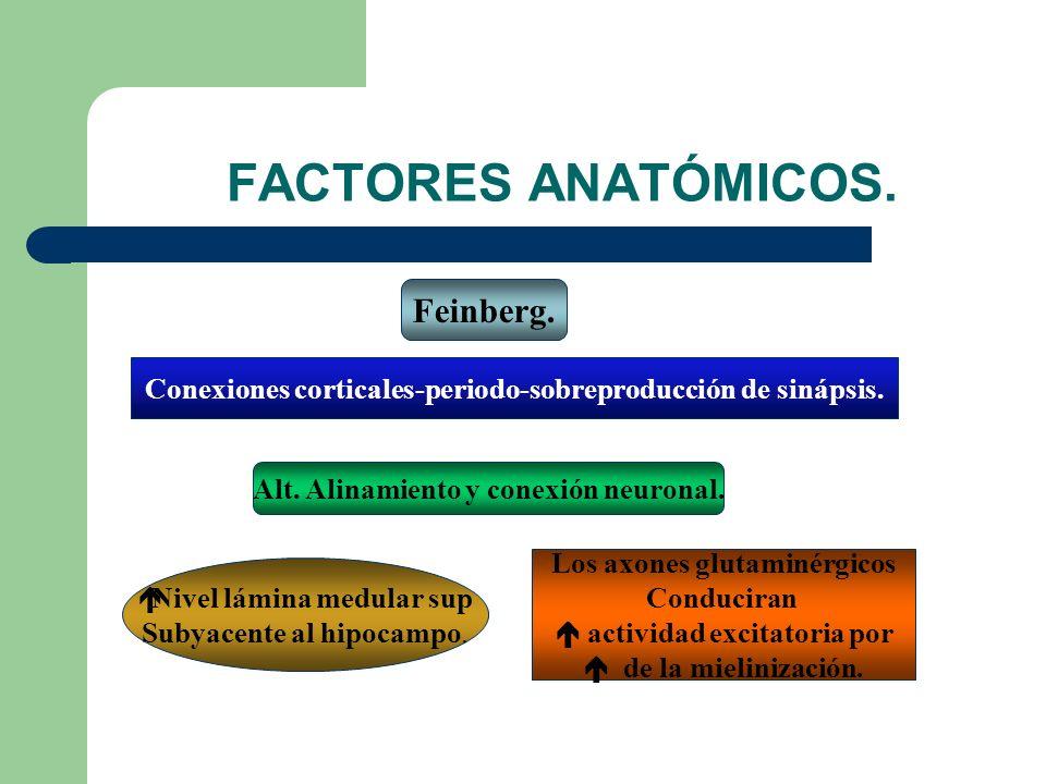 FACTORES ANATÓMICOS. Feinberg.