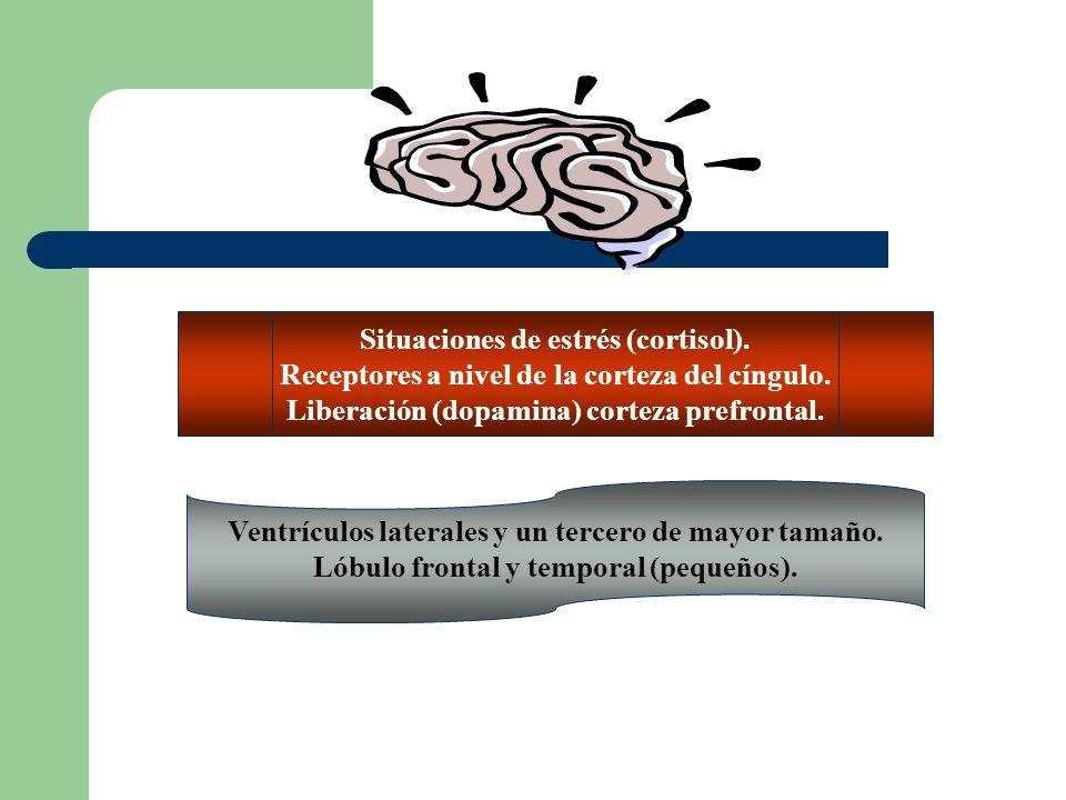 Situaciones de estrés (cortisol).