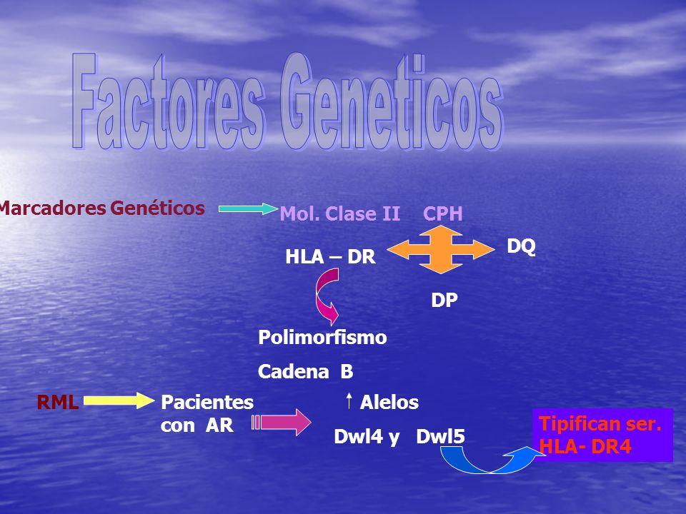Factores Geneticos Marcadores Genéticos Mol. Clase II CPH HLA – DR DP