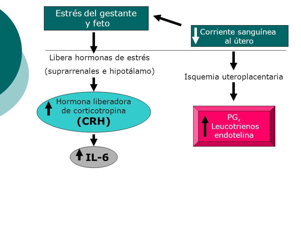 (CRH) IL-6 Estrés del gestante y feto Corriente sanguínea al útero