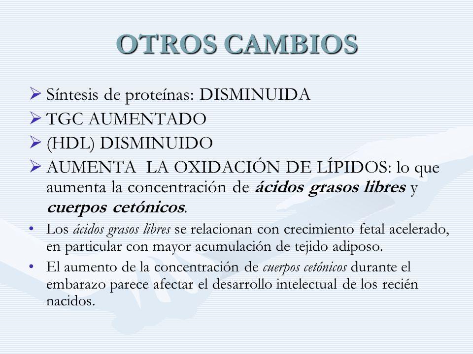 OTROS CAMBIOS Síntesis de proteínas: DISMINUIDA TGC AUMENTADO