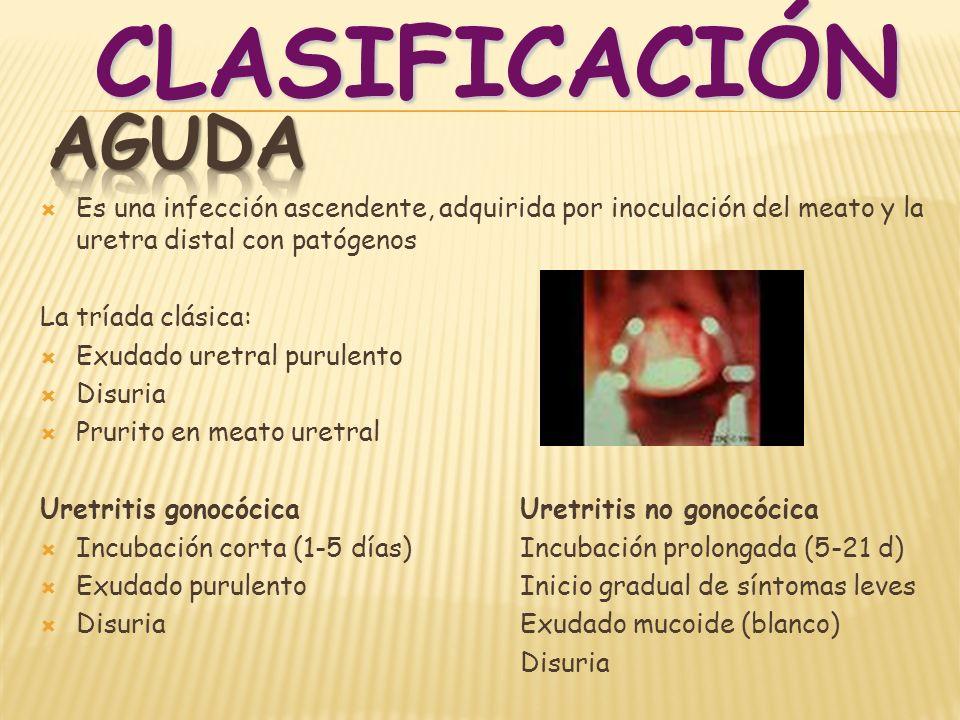CLASIFICACIÓNAGUDA. Es una infección ascendente, adquirida por inoculación del meato y la uretra distal con patógenos.