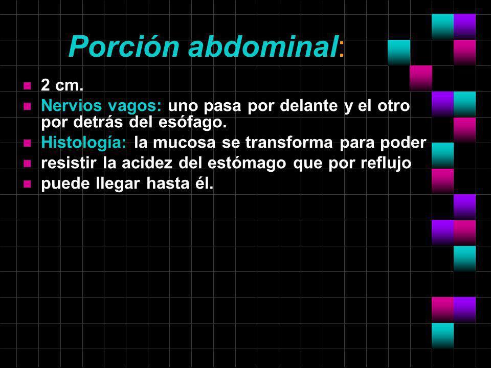 Porción abdominal: 2 cm. Nervios vagos: uno pasa por delante y el otro por detrás del esófago. Histología: la mucosa se transforma para poder.