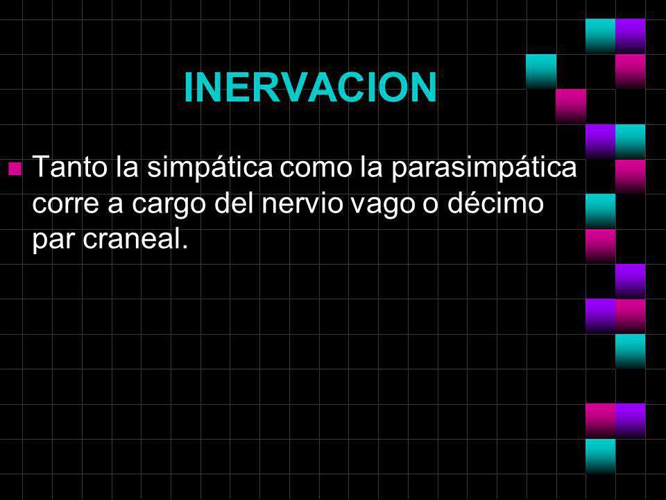 INERVACION Tanto la simpática como la parasimpática corre a cargo del nervio vago o décimo par craneal.