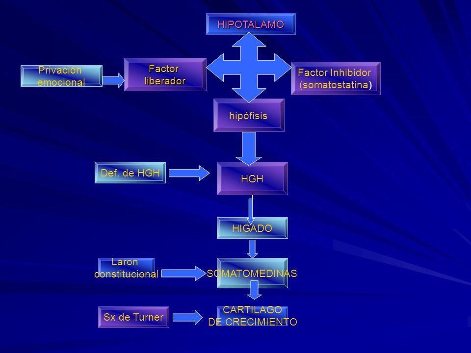HIPOTALAMO Factor. liberador. Factor Inhibidor. (somatostatina) Privación. emocional. hipófisis.