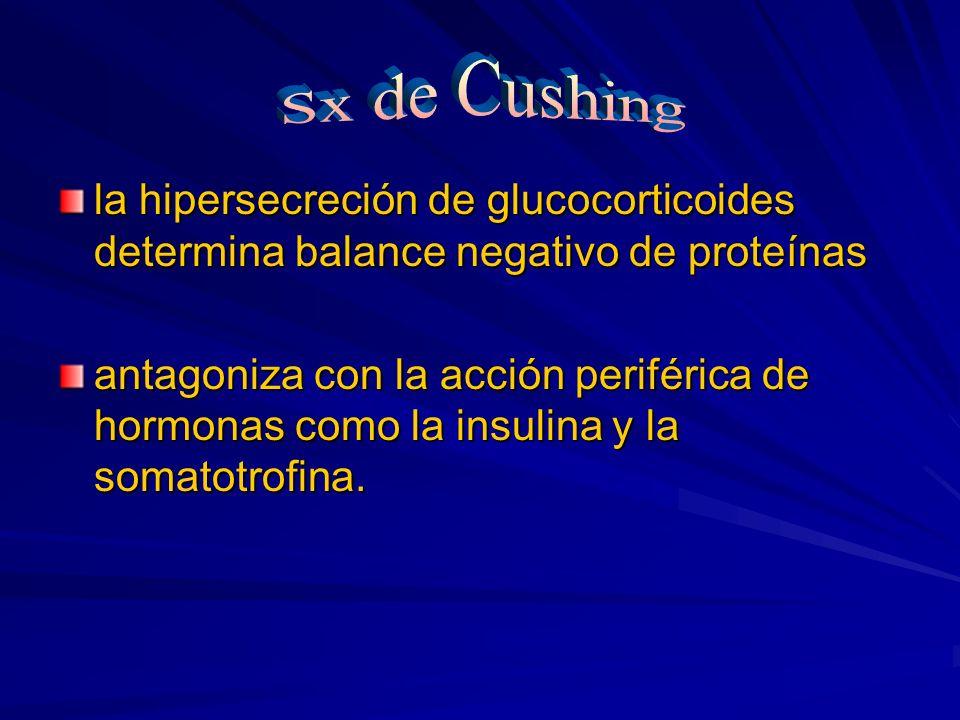 Sx de Cushing la hipersecreción de glucocorticoides determina balance negativo de proteínas.