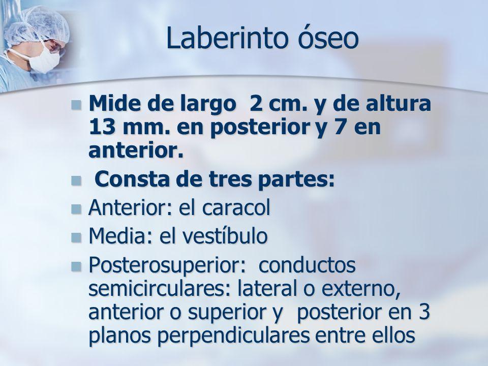 Laberinto óseo Mide de largo 2 cm. y de altura 13 mm. en posterior y 7 en anterior. Consta de tres partes: