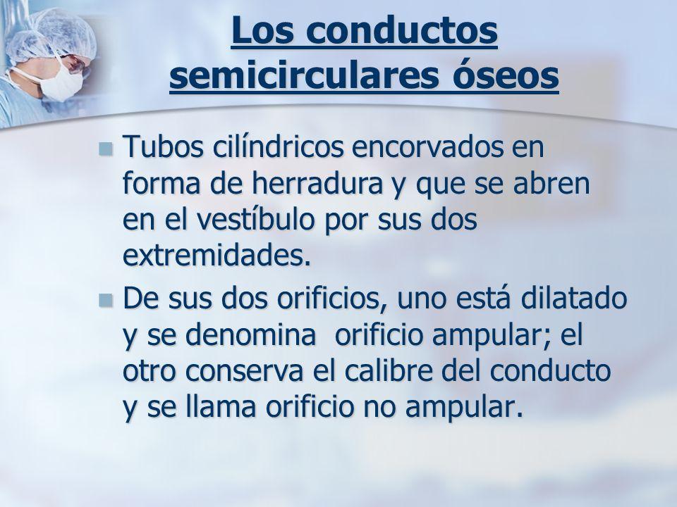 Los conductos semicirculares óseos