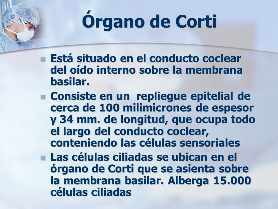 Órgano de CortiEstá situado en el conducto coclear del oído interno sobre la membrana basilar.
