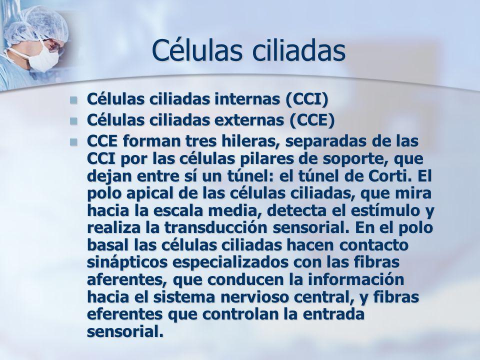 Células ciliadas Células ciliadas internas (CCI)