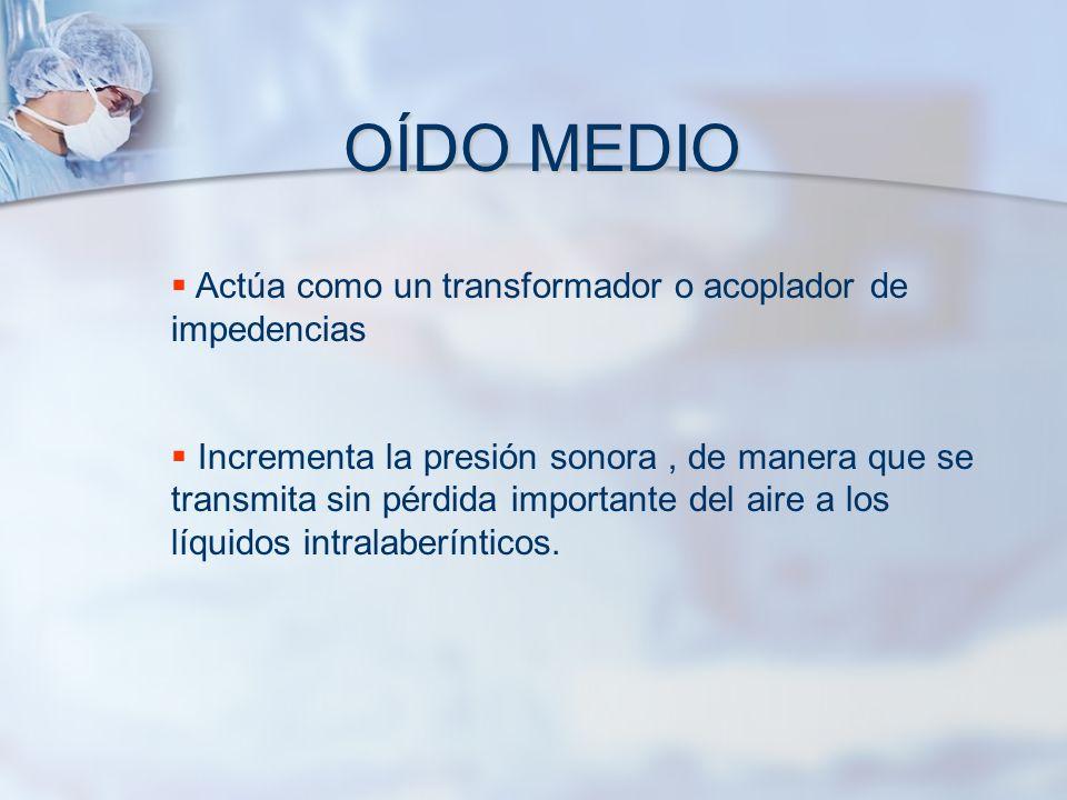 OÍDO MEDIO Actúa como un transformador o acoplador de impedencias