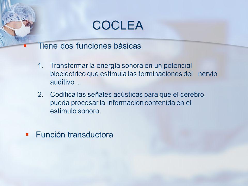 COCLEA Tiene dos funciones básicas Función transductora