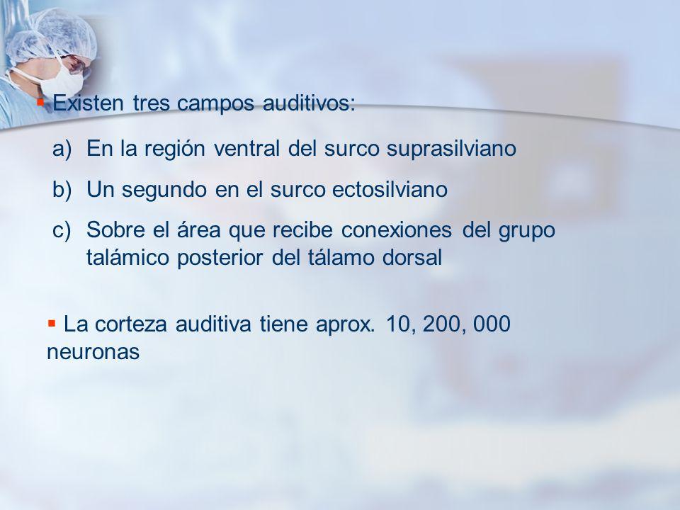 Existen tres campos auditivos: