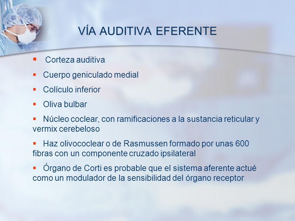 VÍA AUDITIVA EFERENTE Corteza auditiva Cuerpo geniculado medial