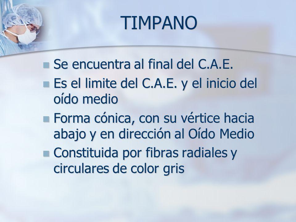 TIMPANO Se encuentra al final del C.A.E.