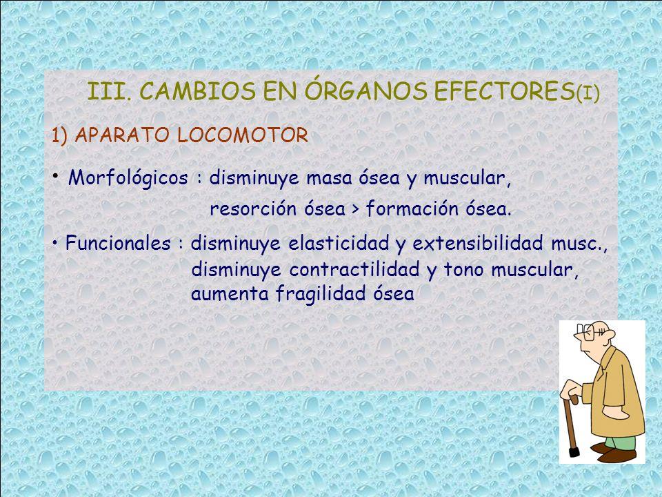III. CAMBIOS EN ÓRGANOS EFECTORES(I)