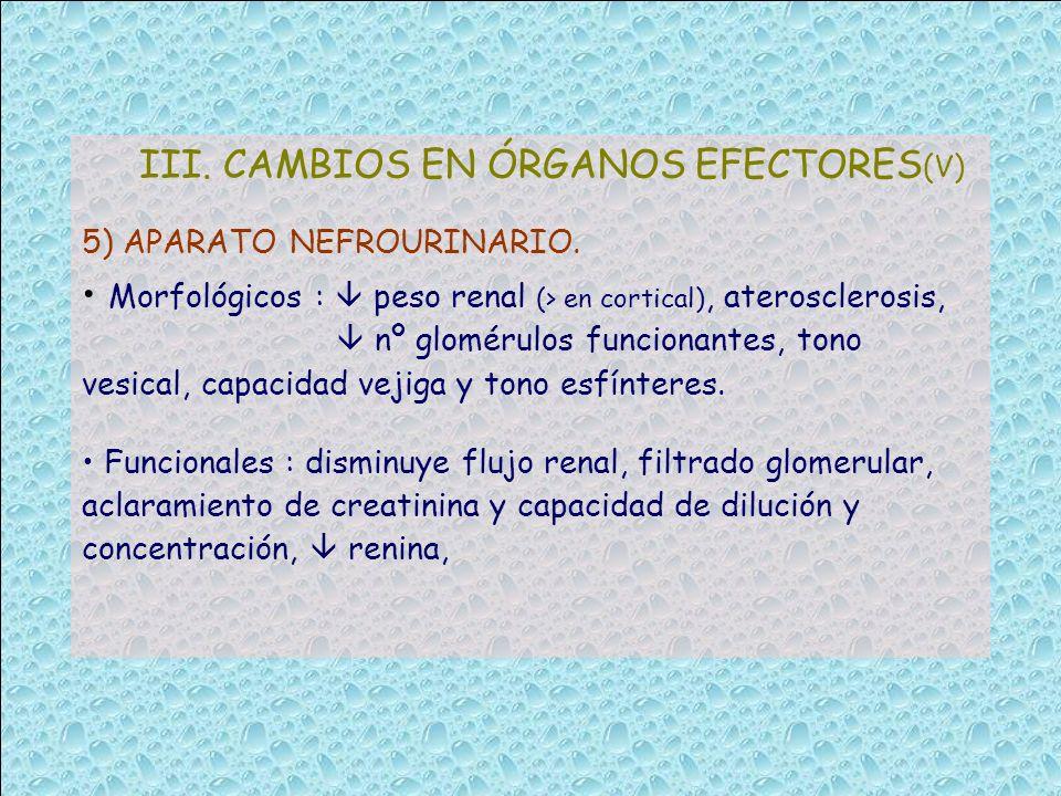III. CAMBIOS EN ÓRGANOS EFECTORES(V)