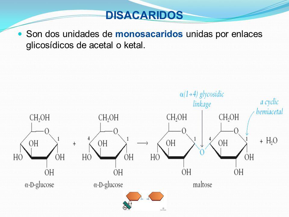 DISACARIDOS Son dos unidades de monosacaridos unidas por enlaces glicosídicos de acetal o ketal.