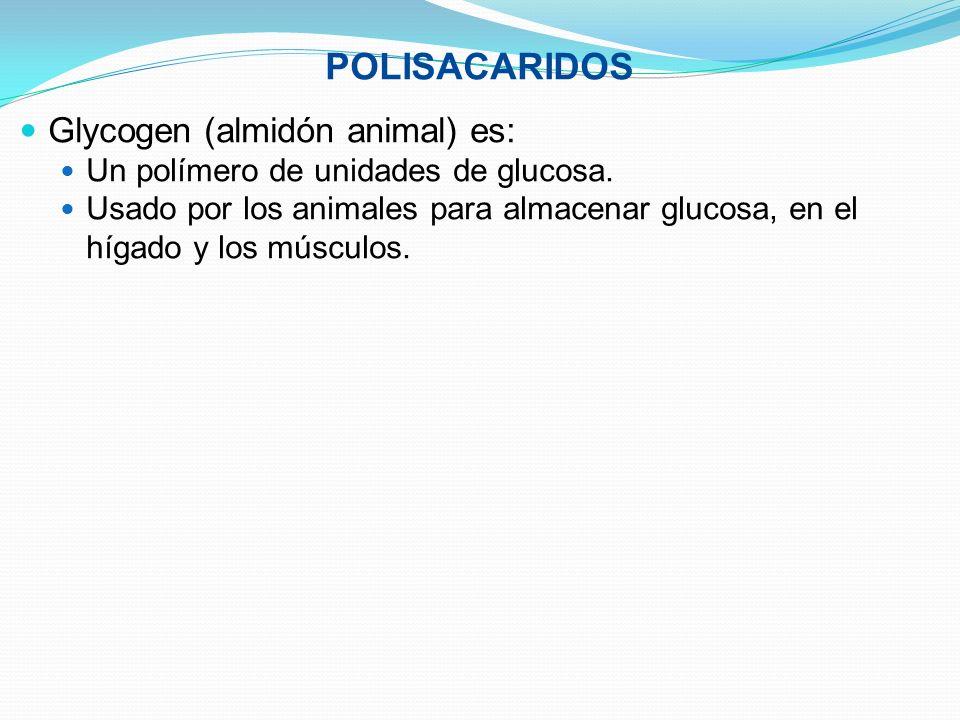 POLISACARIDOS Glycogen (almidón animal) es: