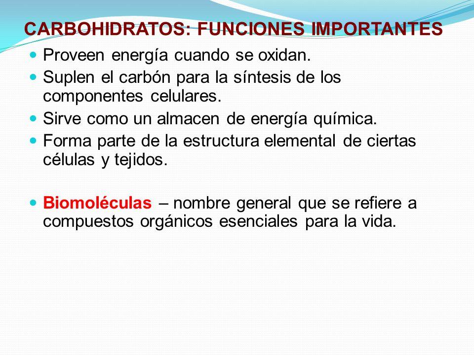 CARBOHIDRATOS: FUNCIONES IMPORTANTES