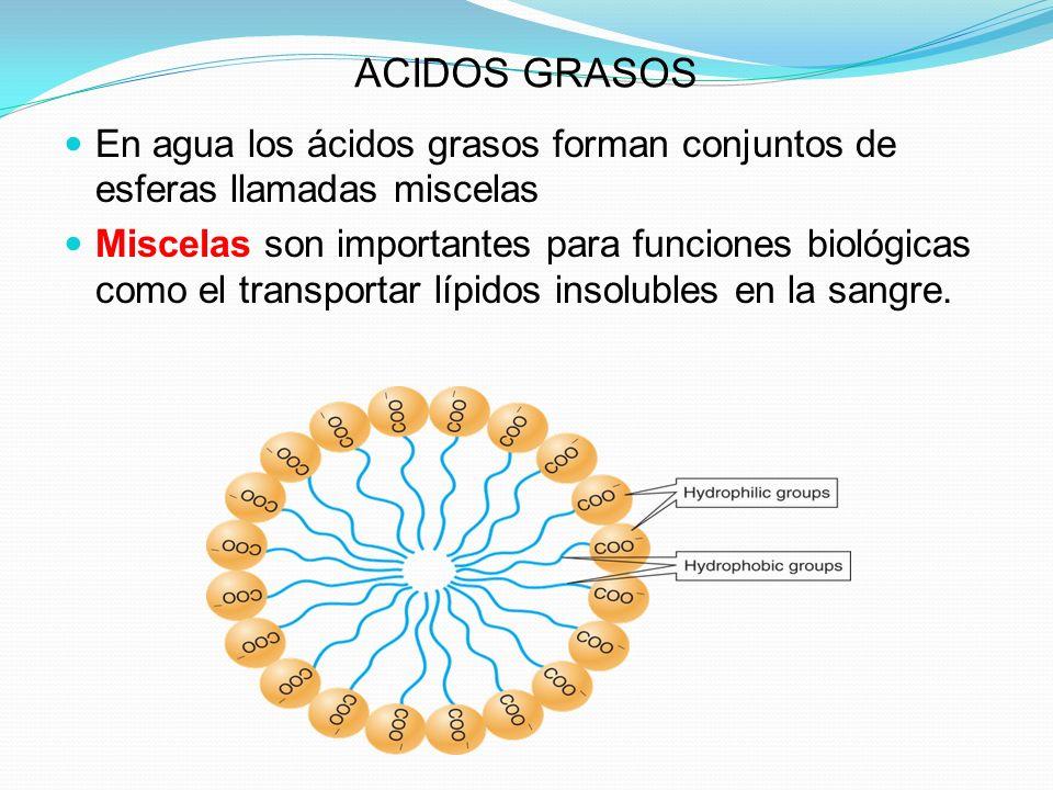 ACIDOS GRASOS En agua los ácidos grasos forman conjuntos de esferas llamadas miscelas.