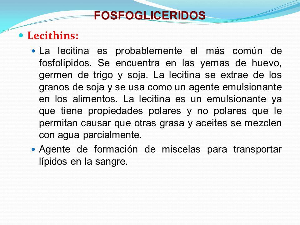 FOSFOGLICERIDOS Lecithins: