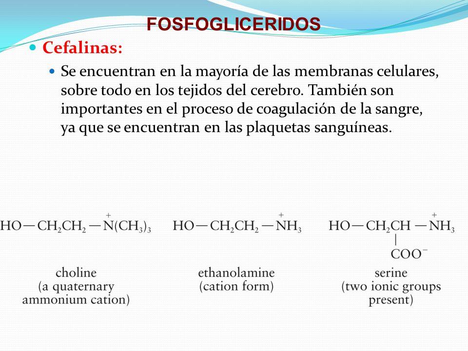 FOSFOGLICERIDOS Cefalinas: