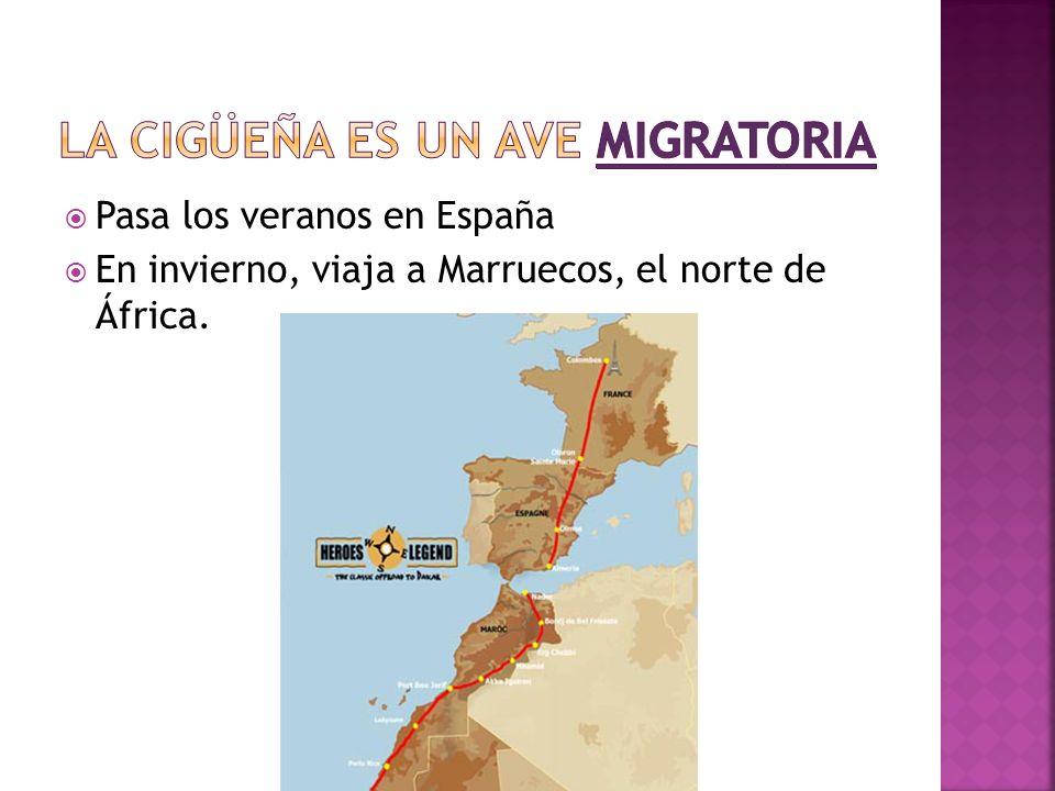 La cigüeña es un ave migratoria
