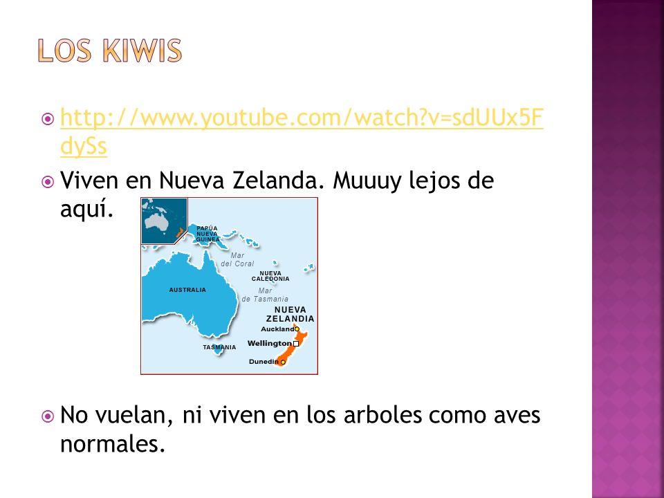 Los kiwis http://www.youtube.com/watch v=sdUUx5F dySs