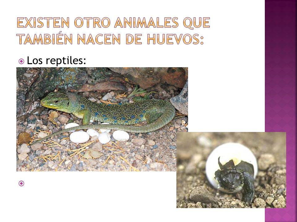 Existen otro animales que también nacen de huevos: