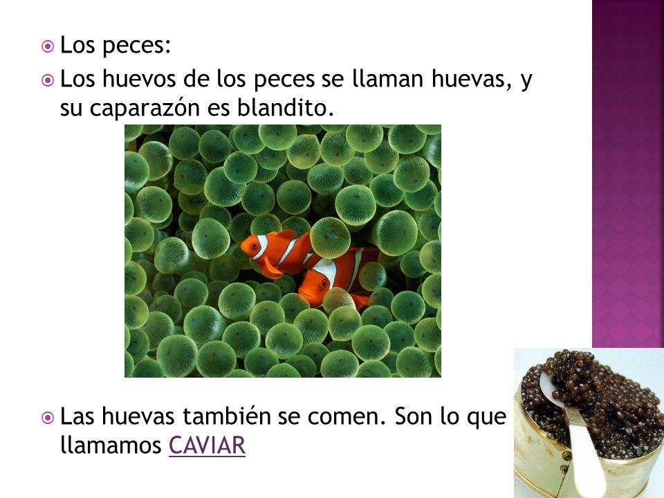 Los peces: Los huevos de los peces se llaman huevas, y su caparazón es blandito.