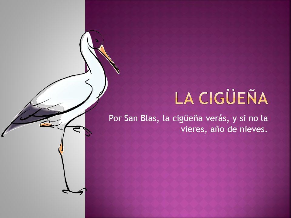 Por San Blas, la cigüeña verás, y si no la vieres, año de nieves.