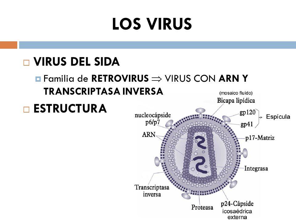 LOS VIRUS VIRUS DEL SIDA ESTRUCTURA