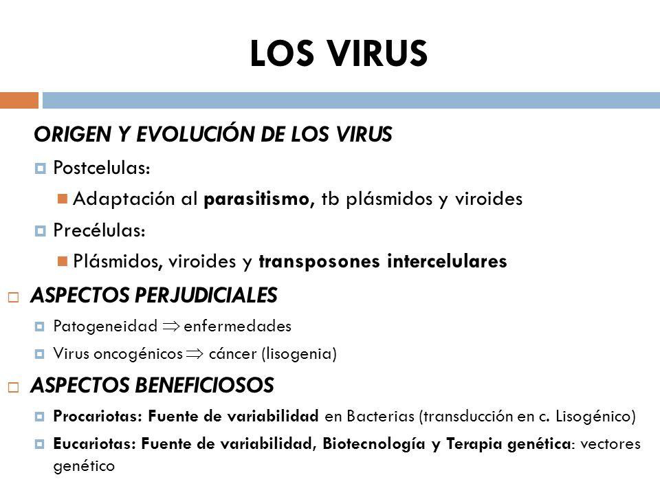 LOS VIRUS ORIGEN Y EVOLUCIÓN DE LOS VIRUS ASPECTOS PERJUDICIALES