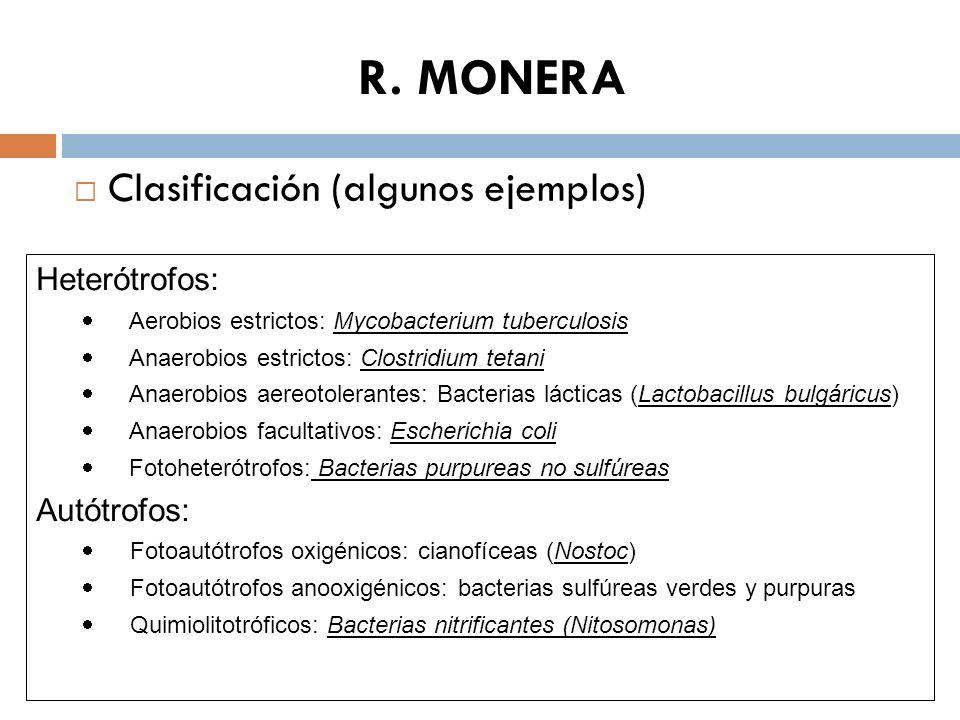 R. MONERA Clasificación (algunos ejemplos) Heterótrofos: Autótrofos: