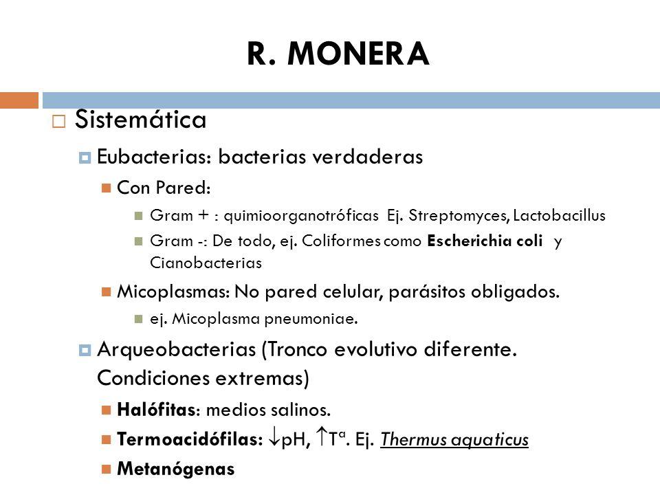 R. MONERA Sistemática Eubacterias: bacterias verdaderas