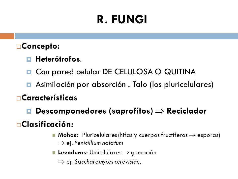 R. FUNGI Concepto: Características
